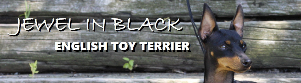 www.english-toy-terrier.at